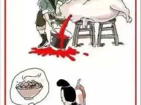 我们要坚定不移地喊出:腊月二十六,杀猪割年肉